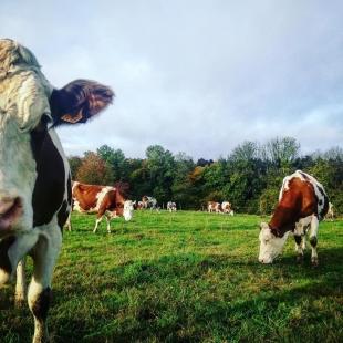Winter is coming...  #coopbouclans #livraisonàdomicile #boutiqueenligne #drive #agriculture #doubs #franchecomté #savoirfaire #comté #agriculturelocale #agricultureraisonnée #naiseylesgranges #nancray #rochelezbeaupré #bouclans #fromagerie #lait #élevage #agriculturefrançaise #coopérative #agriculteurs #leterroirestnotreculture #terroirfrançais #mangerlocal